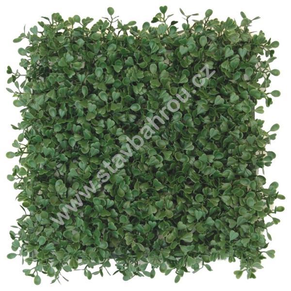 Umělý živý plot Buxus green - zimostráz tmavě zelený dílec 50x50cm