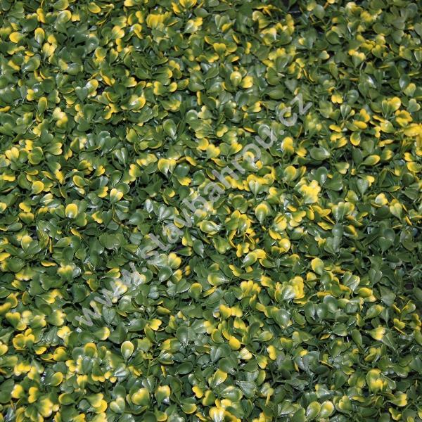 Umělý živý plot Buxus vg - žlutě panašovaný zimostráz dlouhý dílec 50x50cm